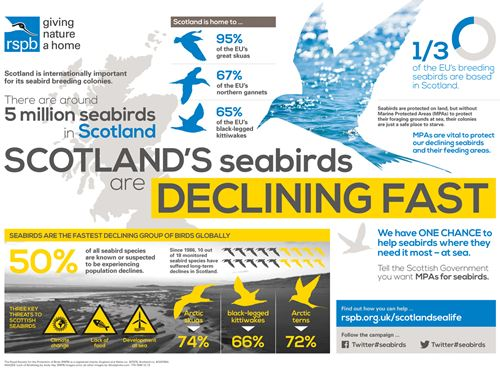 Infographic showing Scotland's declining seabirds population