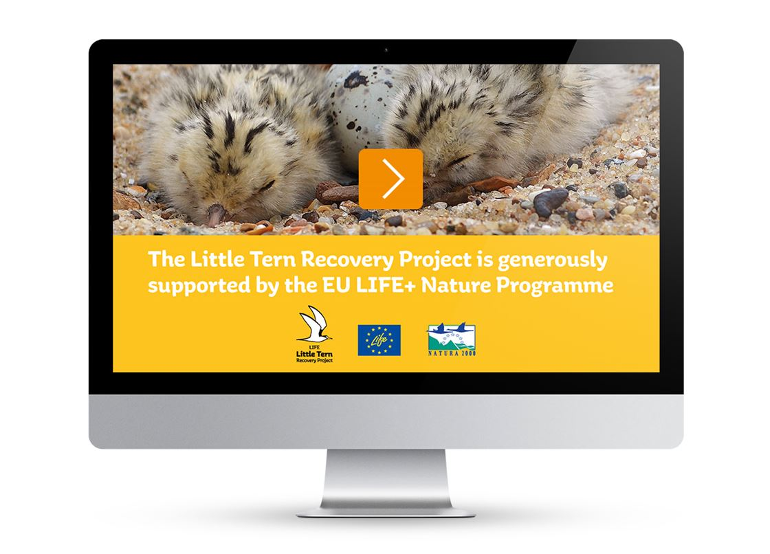 Ensuring the future of the little tern with the RSPB - Brand